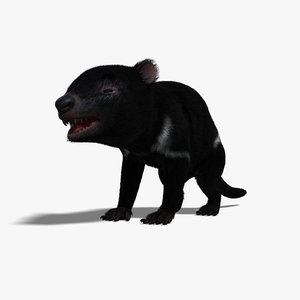 tasmanian devil animal fur 3d model