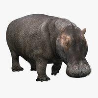 Hippopotamus (2) (RIGGED)