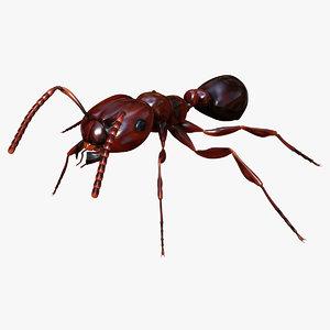 3d model red ant - solenopsis