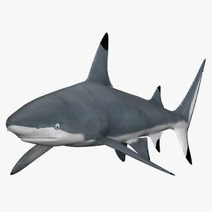 3d shark blacktip model