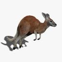 marsupials 3D models
