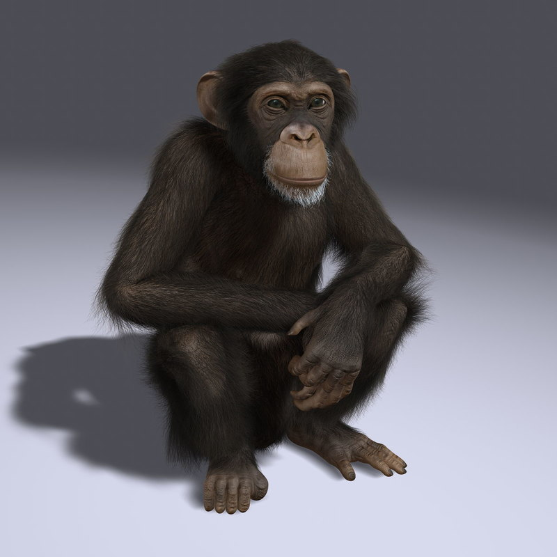maya chimp rigged fur