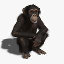 chimpanzee 3D models