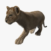 3d model lion cub fur animation