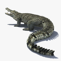 realistic crocodile animation 3d model