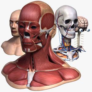 3ds max head anatomy