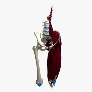 obj human upper leg