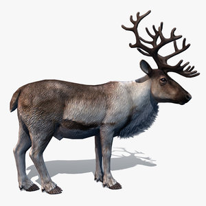 rigged reindeer deer 3d model