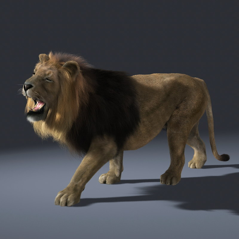 lion fur animation ma