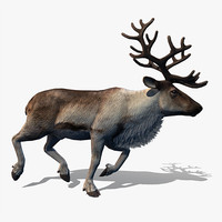 3d model reindeer deer animation walk