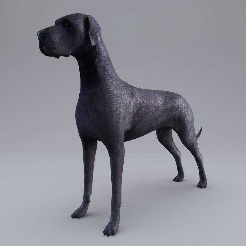 3d model great dane dog