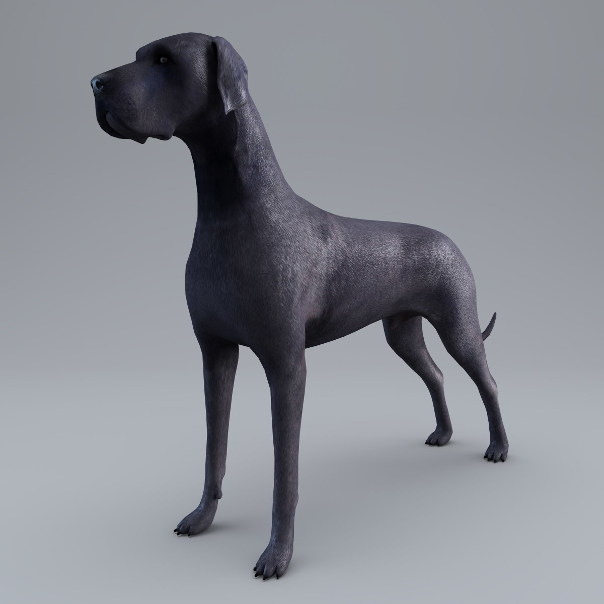 3d model great dane dog