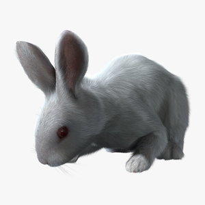 rabbit white rigged fur 3d ma