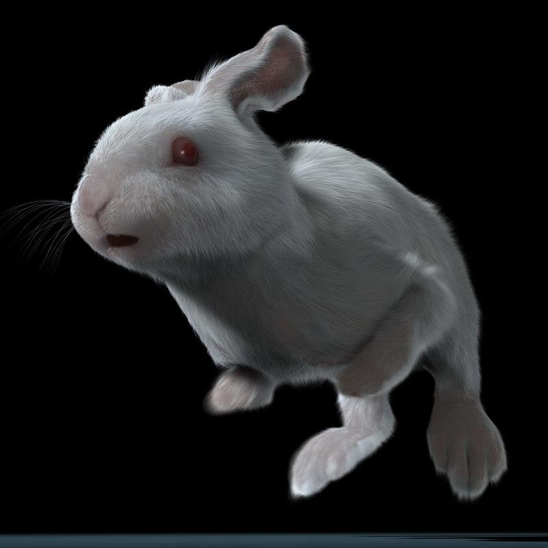 maya rabbit white fur animation