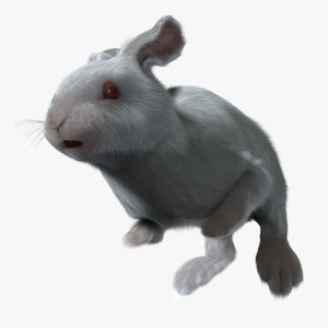 maya rabbit white fur animation