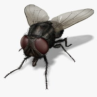 Housefly (FUR)