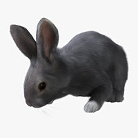 3d ma rabbit grey rigged fur