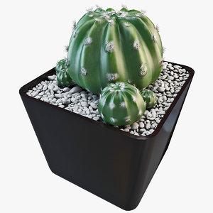 3d echinopsis eyriesii cactus plant model