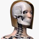 Female Skeleton 3D models
