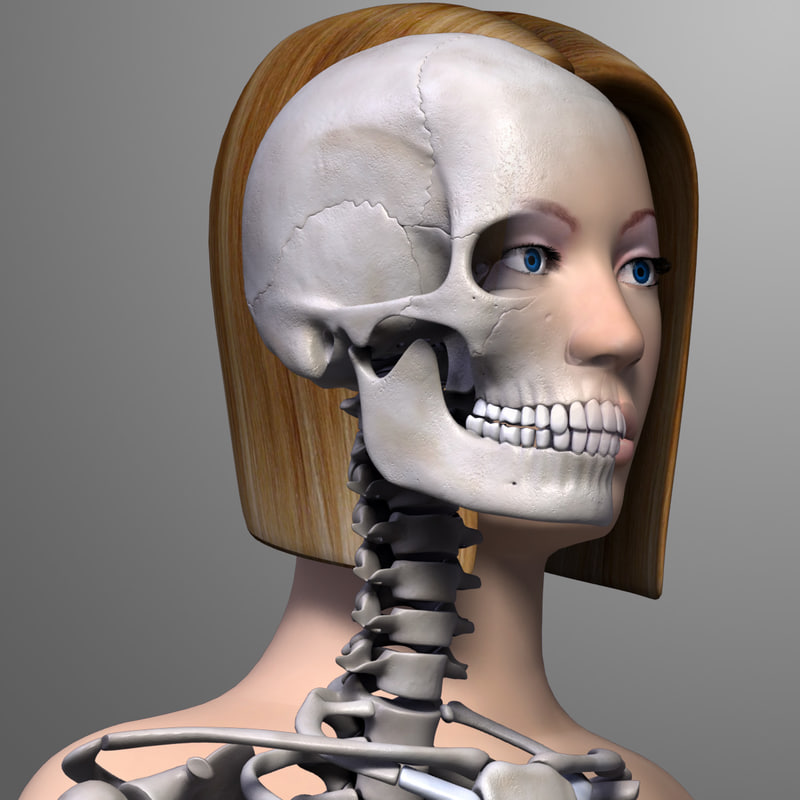 anatomically female body skeleton arm 3d model