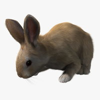 rabbit cream rigged fur 3d model
