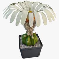 3d max ariocarpus scaphirostris cactus