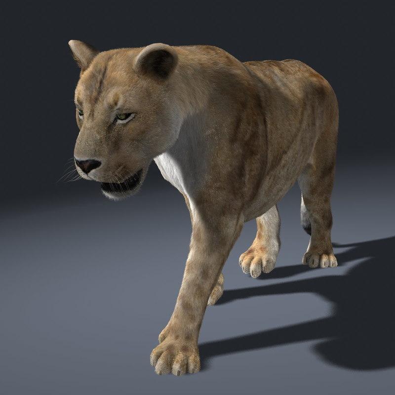 lioness fur lion animation 3d ma