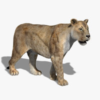 maya lioness rigged fur lion