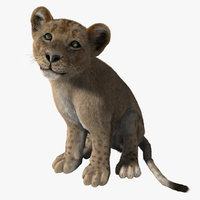 lion cub rigged fur 3d ma