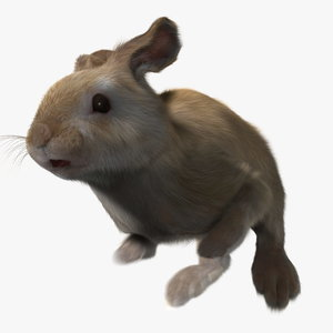 3d model rabbit cream fur animation