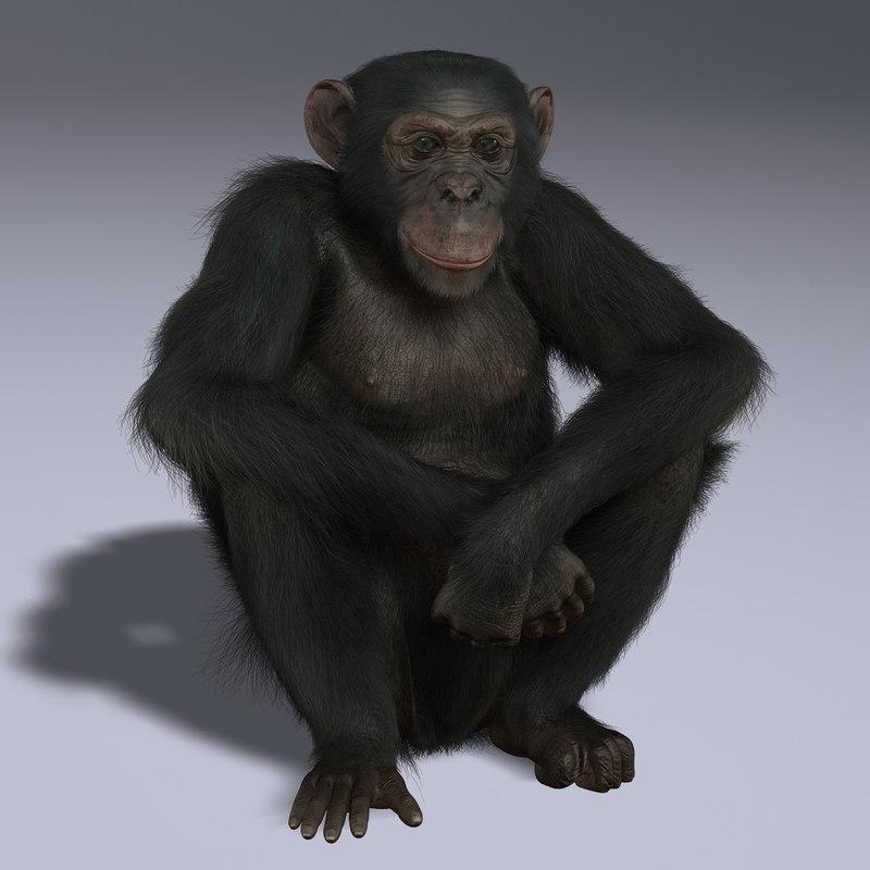 ma chimp rigged fur