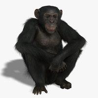 Chimp (RIGGED) (FUR)