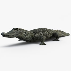 3d dwarf crocodile model