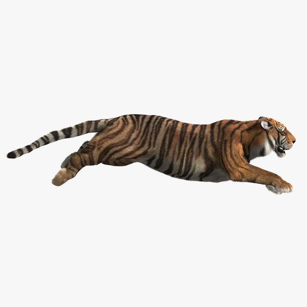 tiger fur 2 animation 3d model