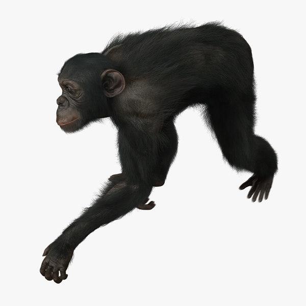 3d model chimp fur animation