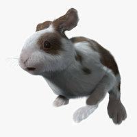 rabbit spotted fur animation 3d model