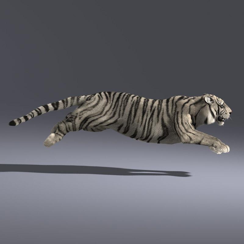 white tiger fur 2 ma