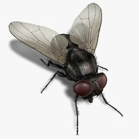 Housefly (RIGGED)