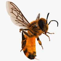 3d model apis mellifera honey bee