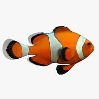 3d fish fish model