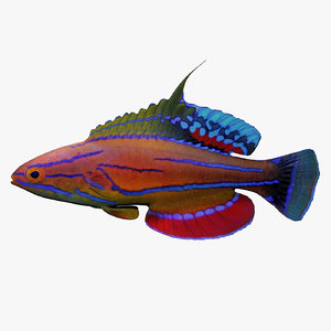 flasher wrasse 3d 3ds