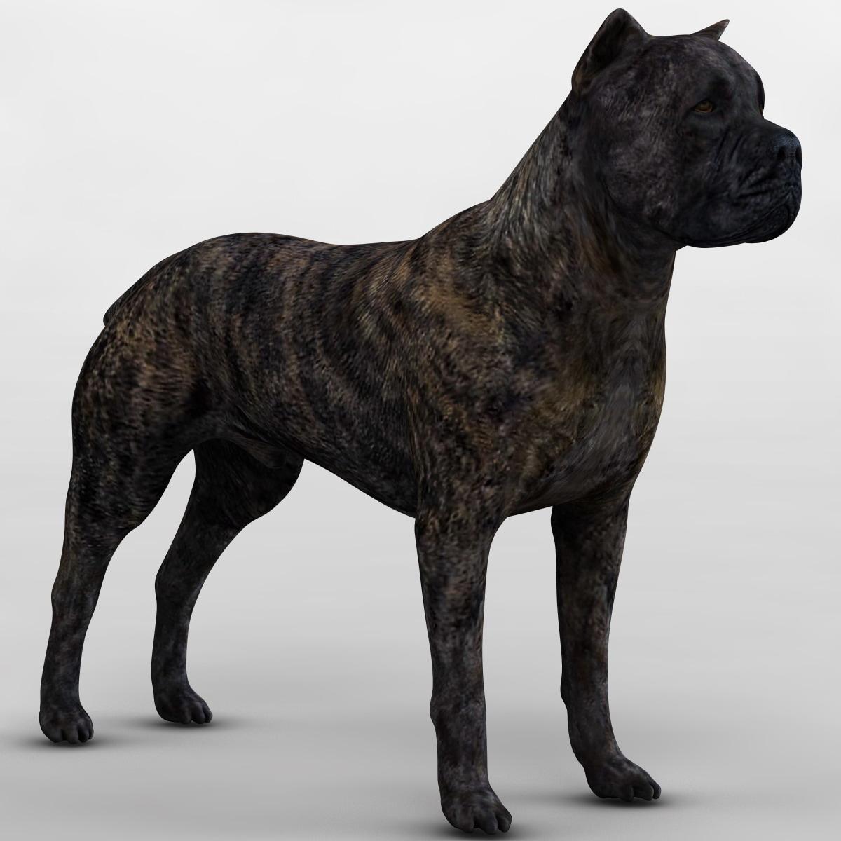 cane corso dog 3ds