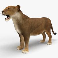 3d lioness fur animal