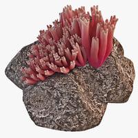 Coral Mushroom Ramaria Araiospora