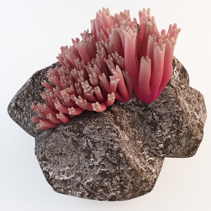 ramaria araiospora coral mushroom 3d max
