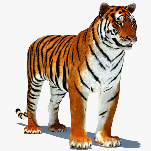 3d model tiger amur animation cat