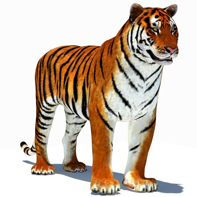 3d model tiger amur animation cat