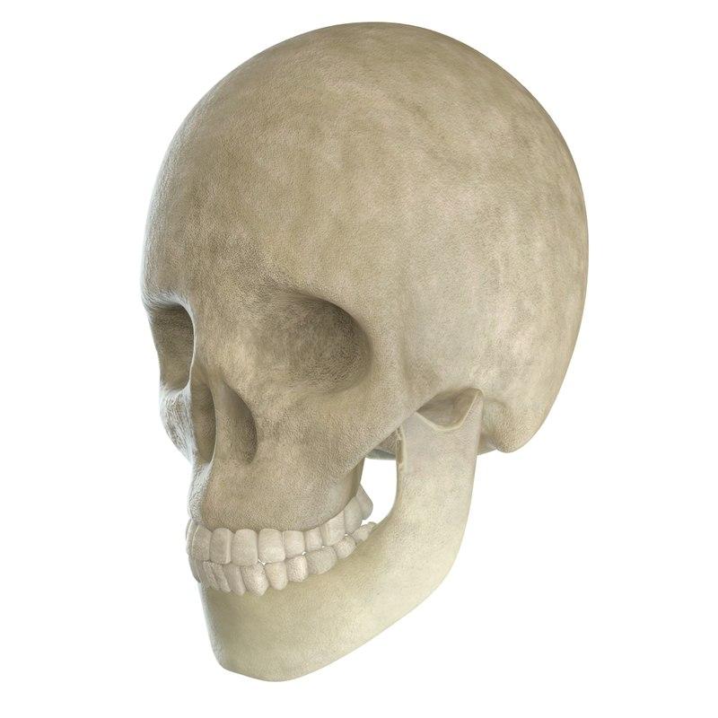 skull jaw 3d max