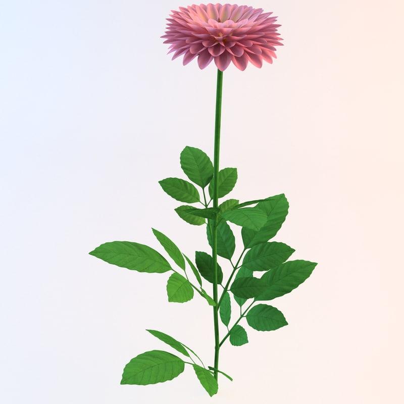 dahlia flower 3ds