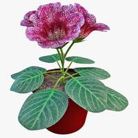 violet gloxinia flower 3d model
